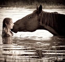 Traumdeutung Pferd